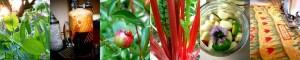 Organic Gardening and Urban Homesteading at Misfit Gardening