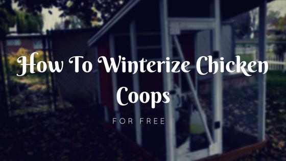 How To Winterize Chicken Coops For Free
