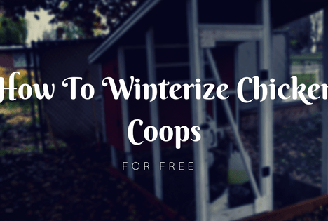 Winterize Your Chicken Coop For Free