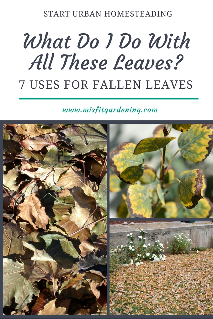 WHAT TO DO WITH FALLEN LEAVES