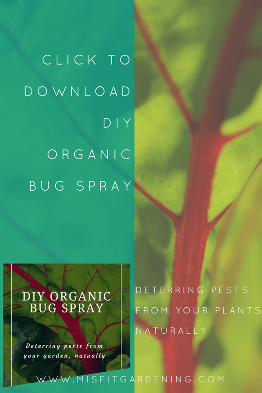 DIY Organic Garden Bug Spray