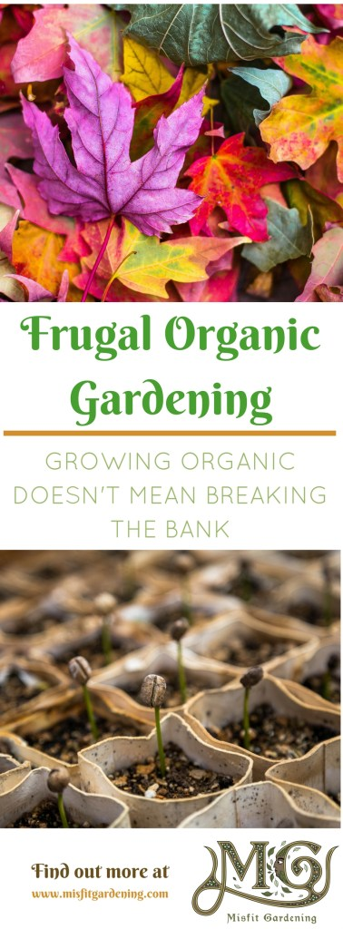 Organic gardening doesn't need to be expensive. Click to find out how to grow organic food frugally or pin it and save for later.