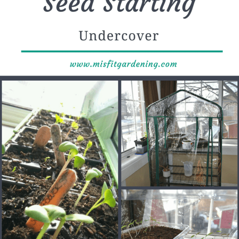 Starting seeds undercover in a greenhouse