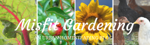 URBAN HOMESTEADING BLOG