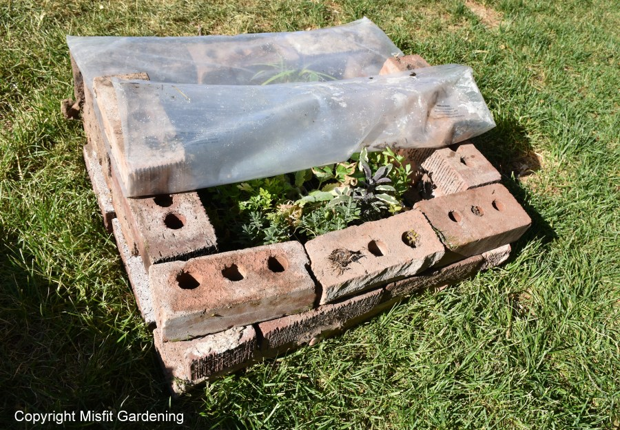 how a cold frame can save you money