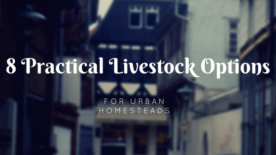 8 Practical Livestock Options For Urban Homesteads