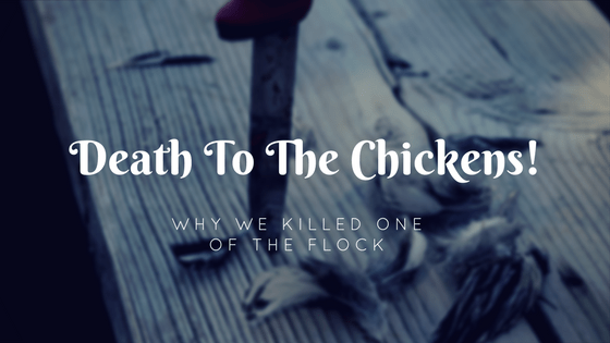Death To The Chickens!  Why We Killed One Of The Flock