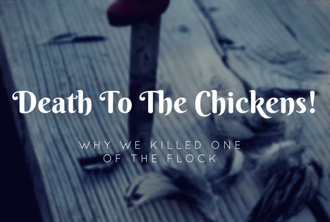 How to cull a chicken