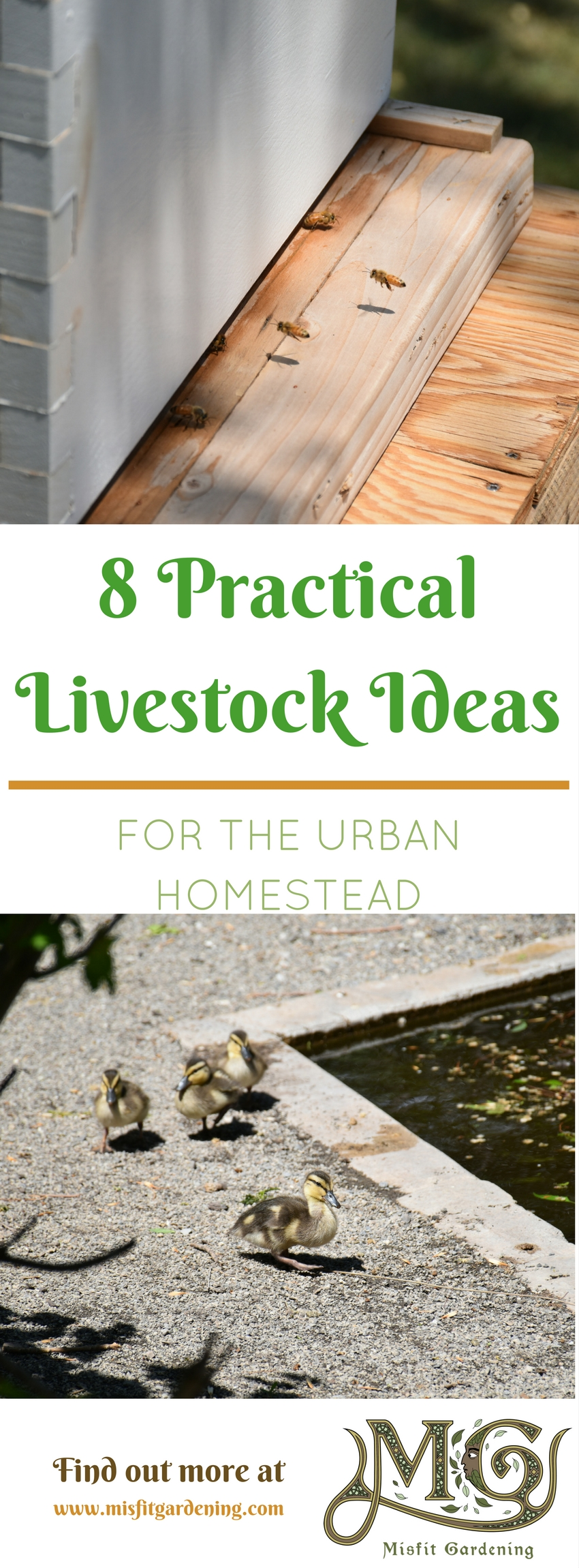 8 practical livestock ideas for urban homesteaders that you can raise in your backyard. Click to find out more or pin it for later
