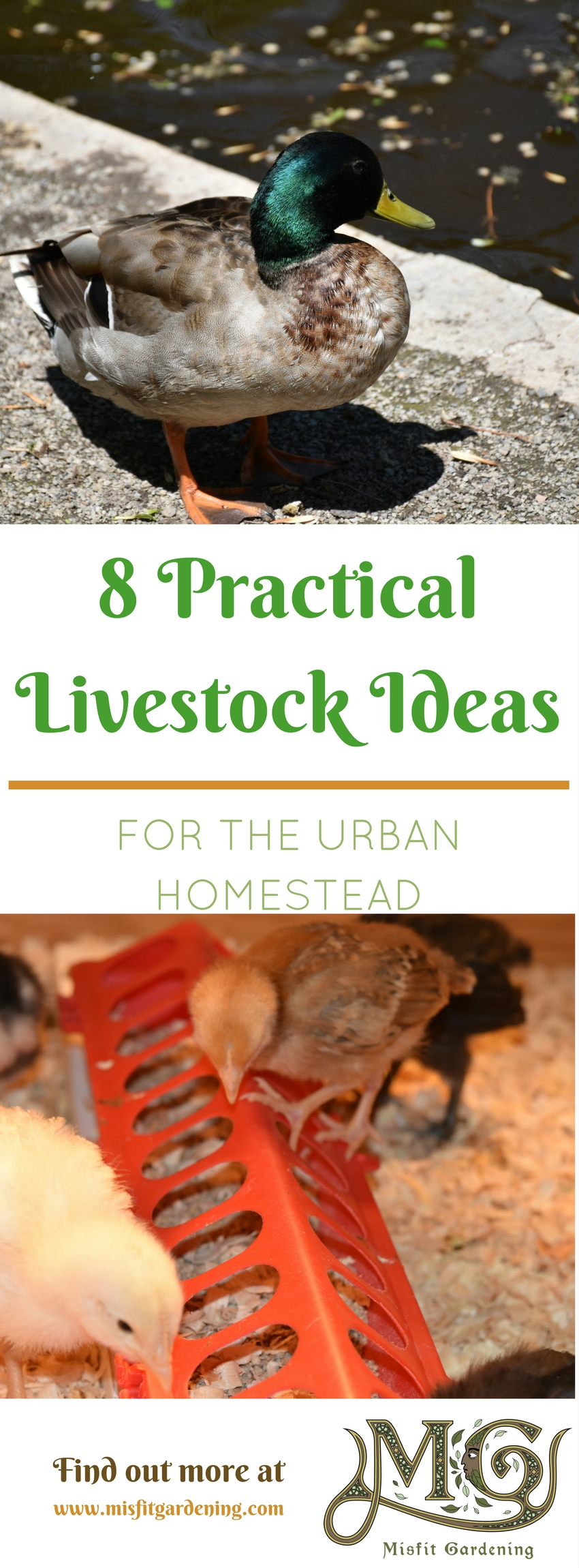 8 practical livestock options for urban homesteaders that you can raise in your backyard. Click to find out more or pin it for later