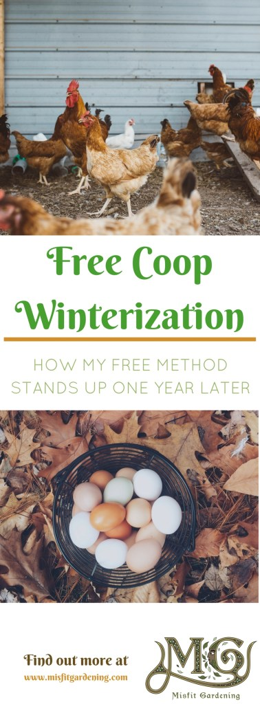 How to winterize a chicken coop for free and how it stands up one year later. Click to find out how to winterize your chicken coop or pin it and save for later.