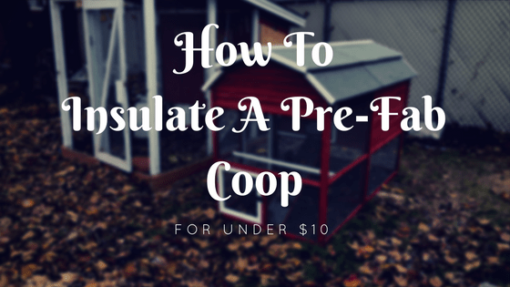 How to Insulate a Prefab Chicken Coop For Under $10