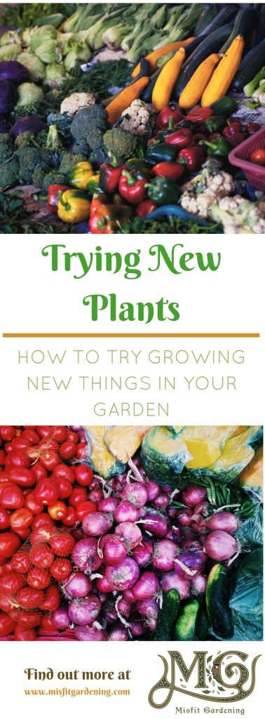 Every year I try new plants and varieties in the garden. Click to find out what's new to try in your garden or pin it and save for later