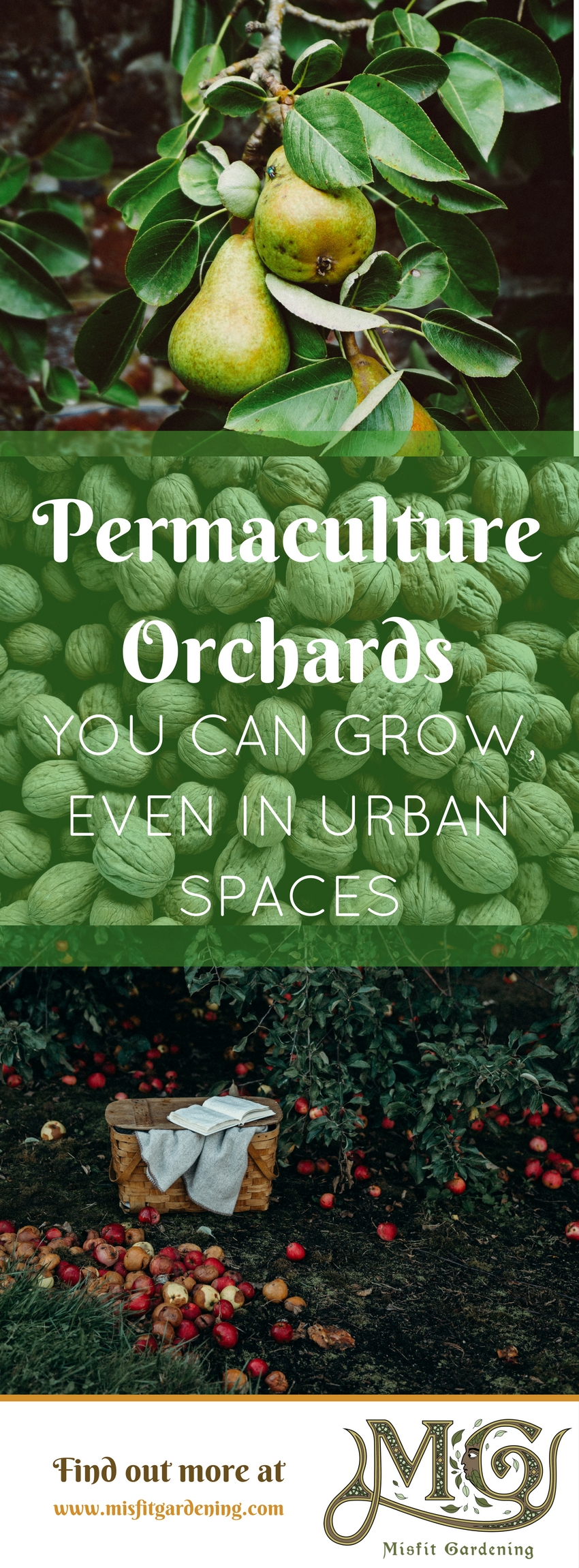 Designing a Permaculture Orchard: How to Grow More Food In ...