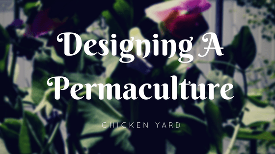 New Chicken Yard With A Permaculture Twist