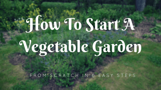 Charmant How To Start A Vegetable Garden From Scratch In 6 Easy Steps   Misfit  Gardening