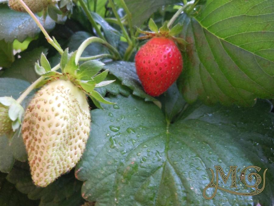 Pflanzen für den Permakulturgarten