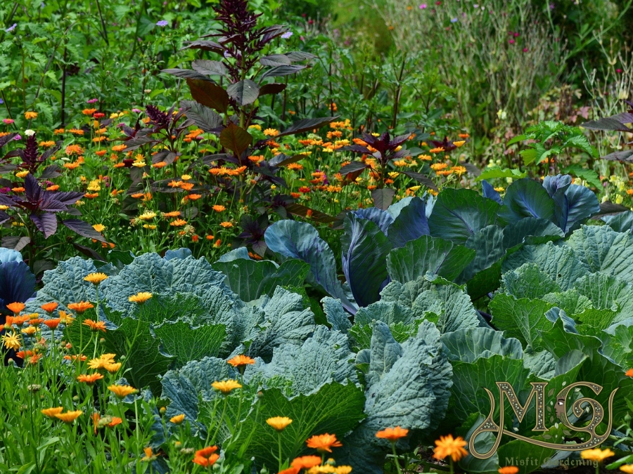 15 Plants For A Permaculture Garden - Misfit Gardening on Backyard Permaculture Design id=98748
