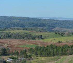 Áreas degradadas de la Selva Misionera en El Soberbio