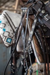 JF19Horses_Bridle