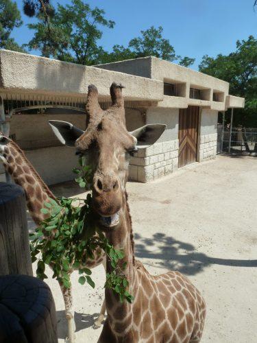 Zoo de la Palmyre Charente Maritime