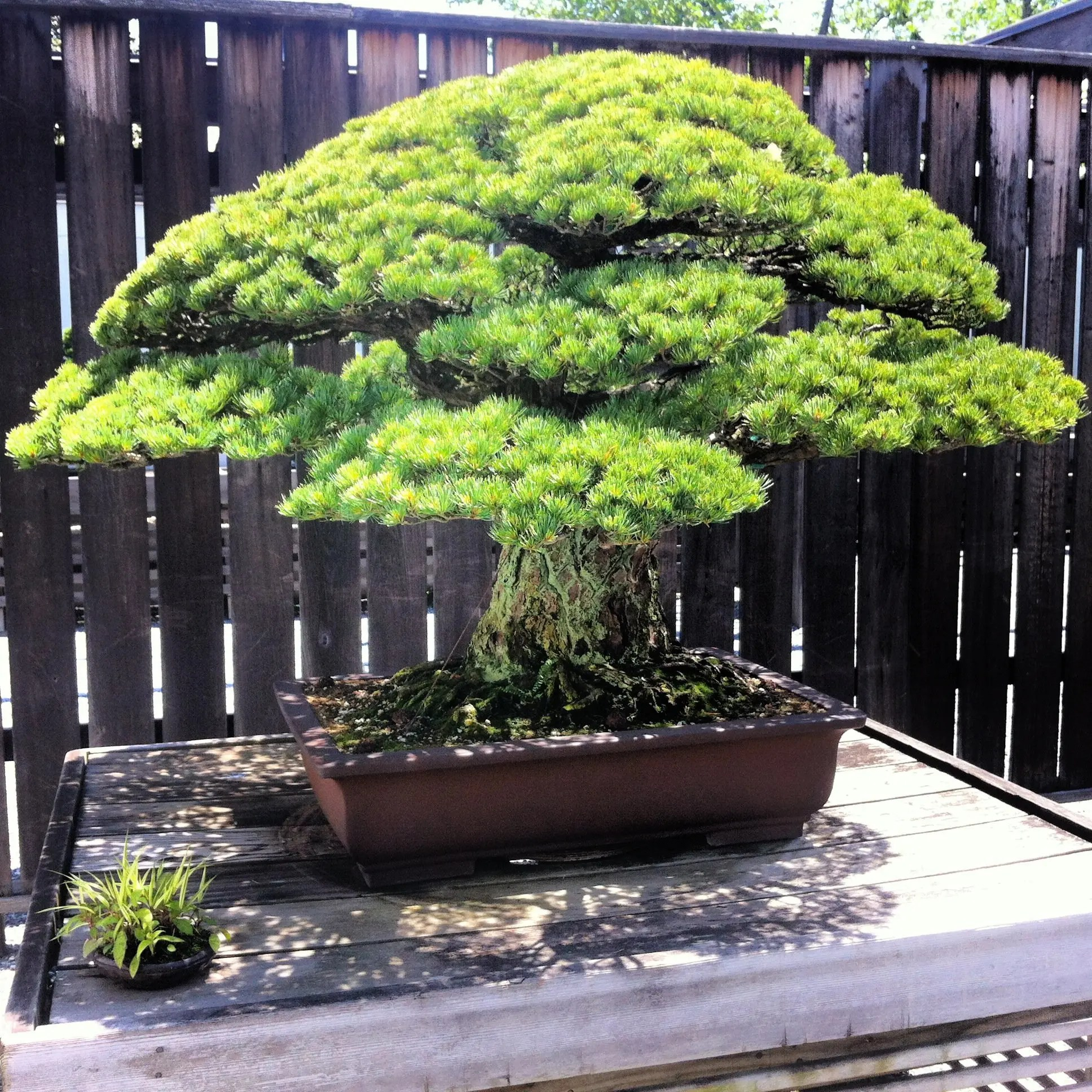 Photos: The National Arboretum and Bonsai Museum