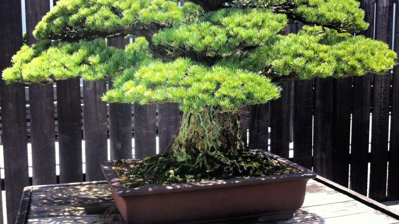 Photos: The National Arboretum and Bonsai Museum