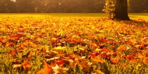 autumn leaves at sunset e1504631406860
