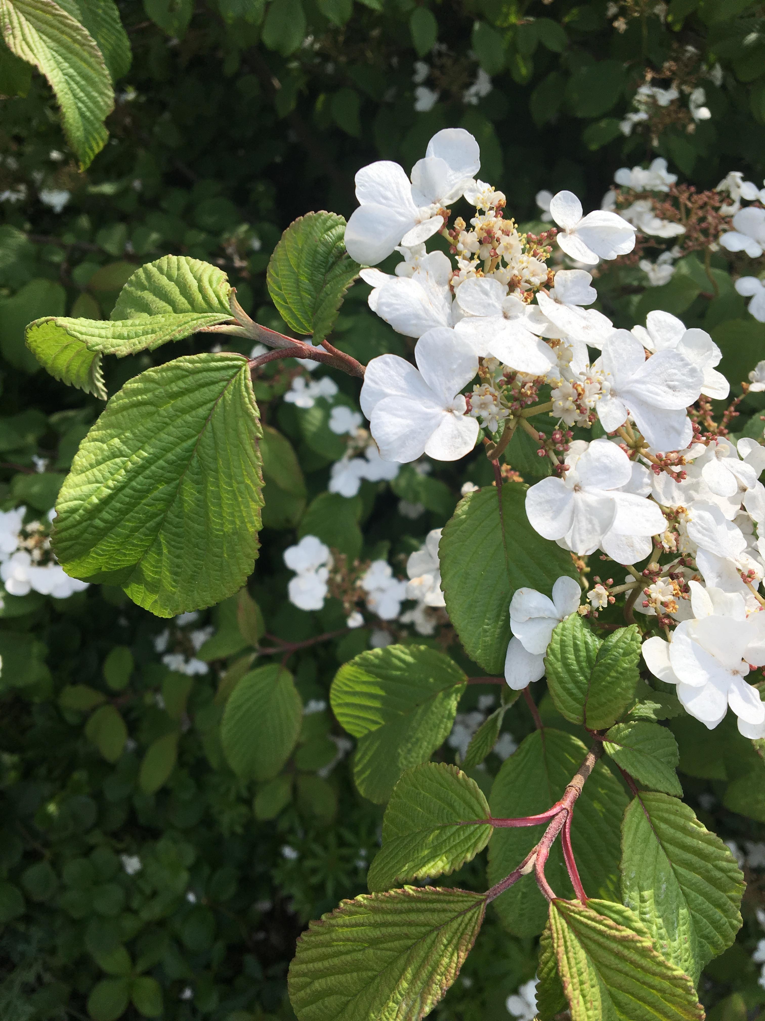 chelsea-flower-show-6
