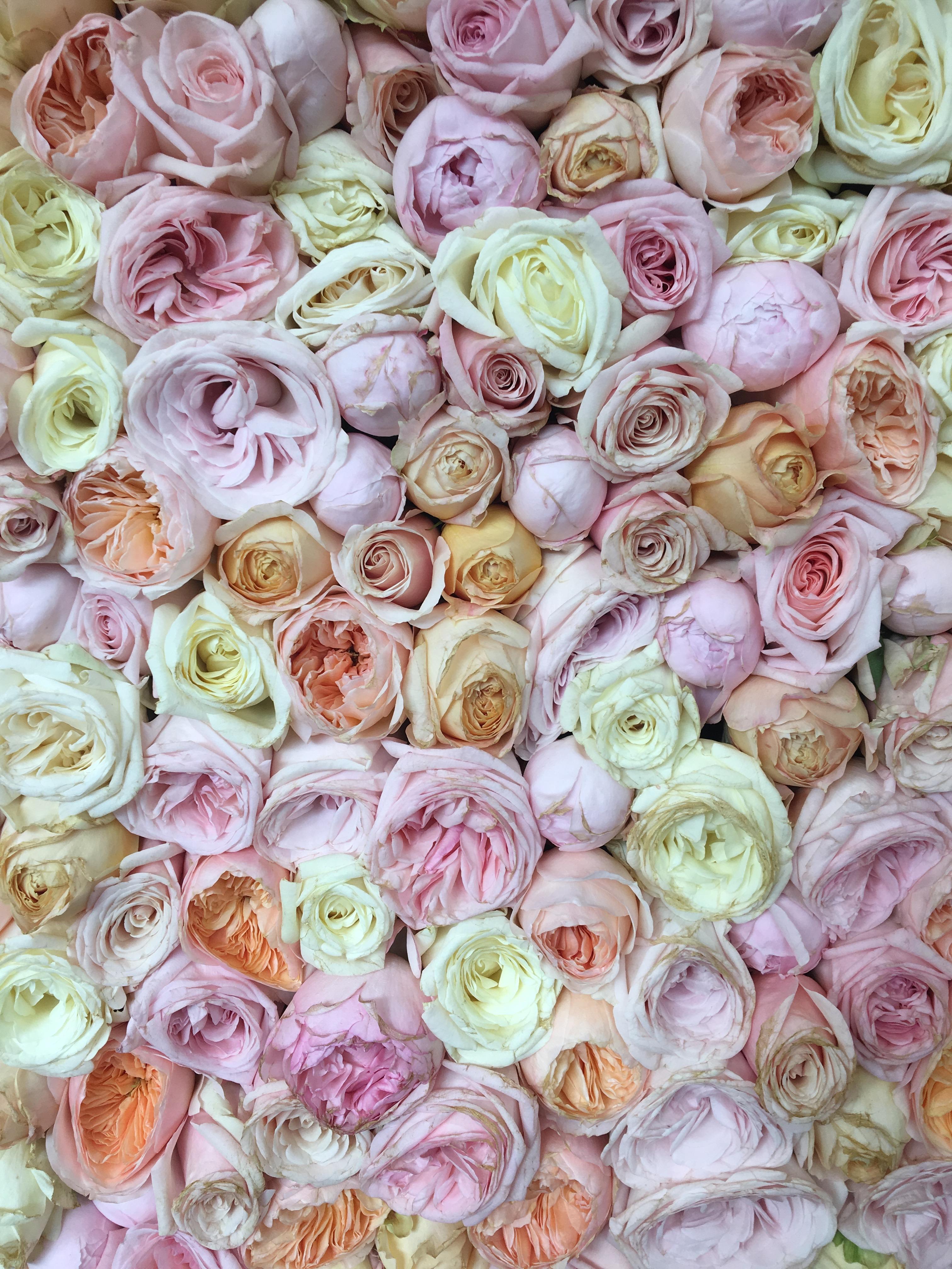 chelsea-flower-show-4