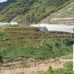 Cameron Highlands Travel Guide: Where to Explore, Eat, and Stay