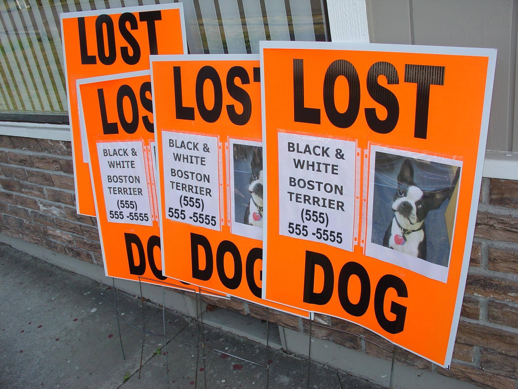 neon posters missing animal response