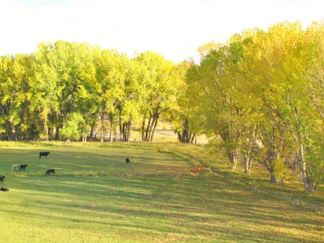 Working with a Realtor ~ Wyoming Cattle Ranch ~ MissintheKitchen.com