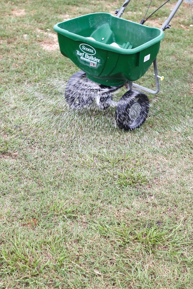 Fall Lawn Care Tips ~ fertilizing before winter