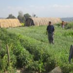 Nepal Mission Rajendra-Nhisutu-in-our-organic-farming-field-150x150 AGRO TOURISM IN NEPAL