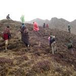 Nepal Mission Yarsa-and-Nepalese-searching-1 HIMALAYAN HERB 'YARSAGUMBA/CORDYCEPS SINENSIS'