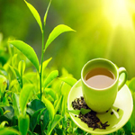 Nepal Mission Green-tea-is-best-for-clean-and-fresh-health HIGH ALTITUDE GREEN TEA