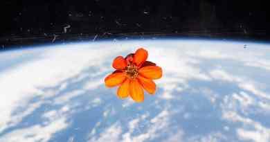 Fiori a bordo della stazione spaziale internazionale