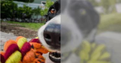 Come vede il mondo un cane