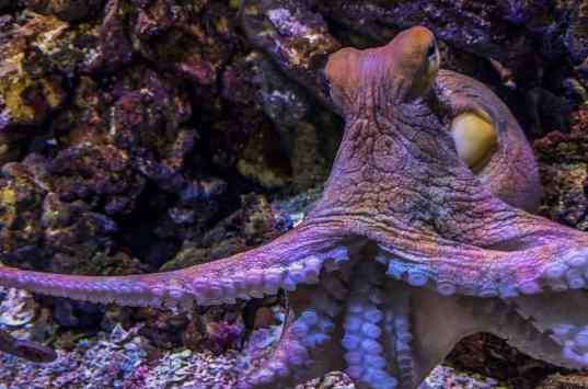 bizzarro mollusco: il polpo