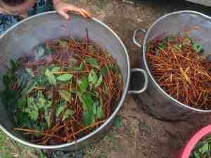 il potere mistico dell'ayahuasca