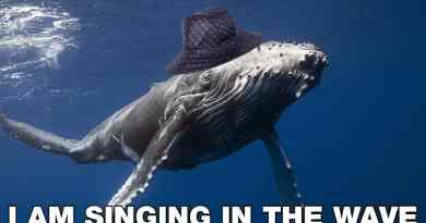 Le melodie del mare