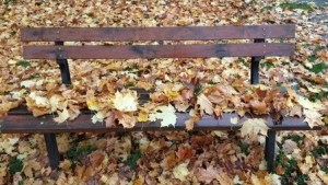 Leaves on Park Bench