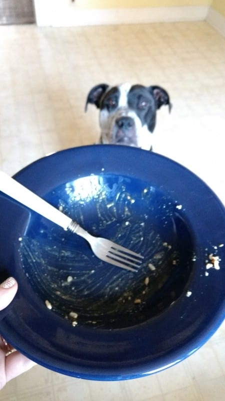 dog peeking over empty bowl working on healthy lifestyle