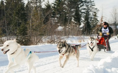 Three Bear Sled Dog Race in Land O' Lakes