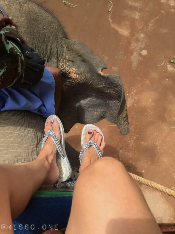 Rider elefant