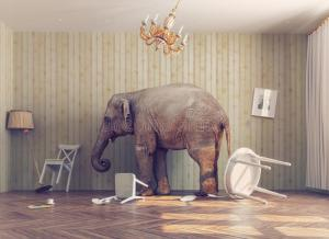 elephant in the room no sex in marriage