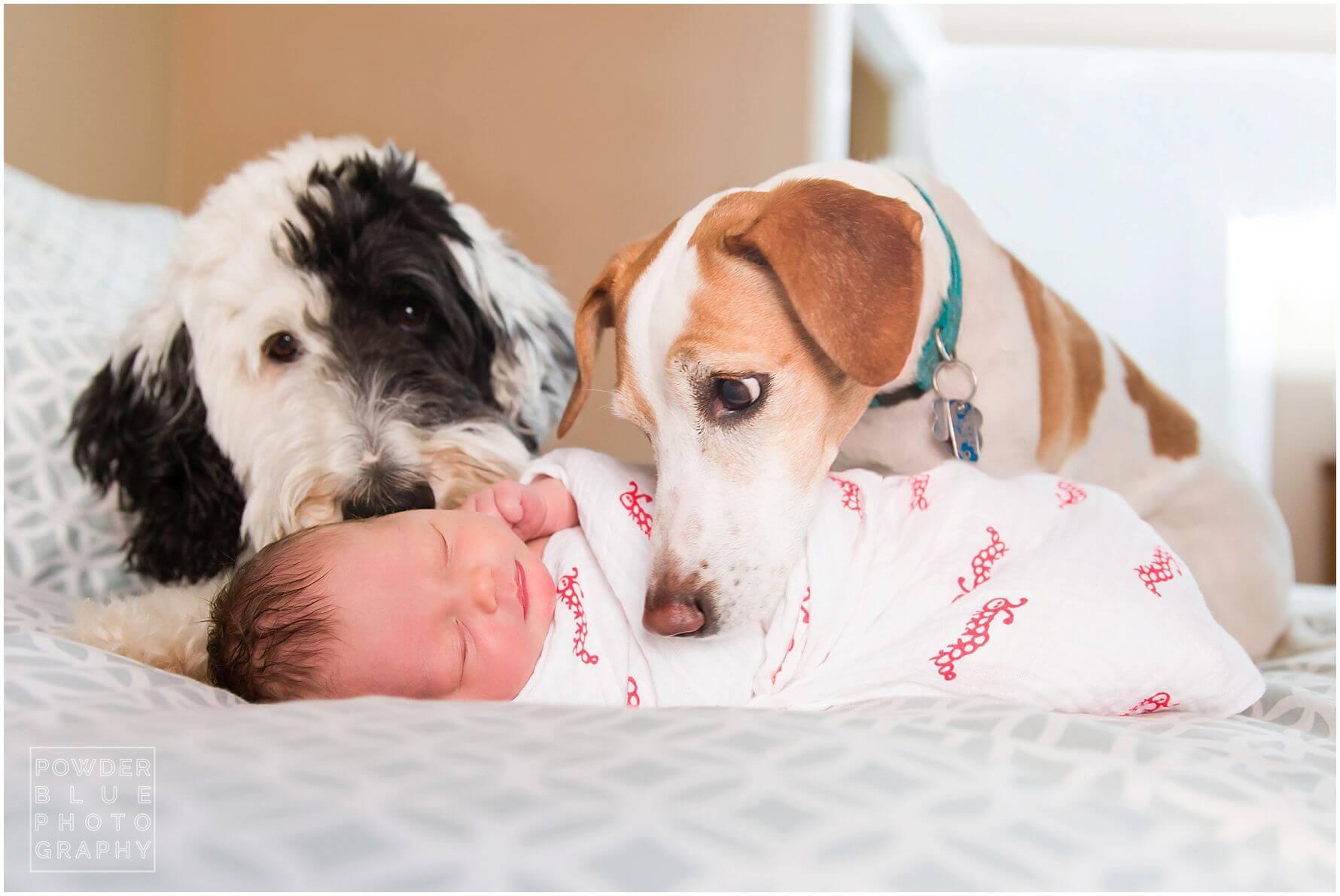 Pittsburgh Newborn Photographer | Baby Anna Rose | Lifestyle Newborn