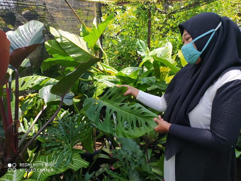 Berkah Di Balik Pandemi Rezeki Berbagai Bunga Hingga Si Janda Bolong Yang Menawan Harian Mistar