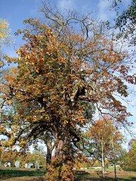 treewithattitudesharp